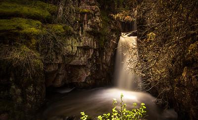lichen falls