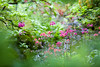 Arboretum-Japanese Garden
