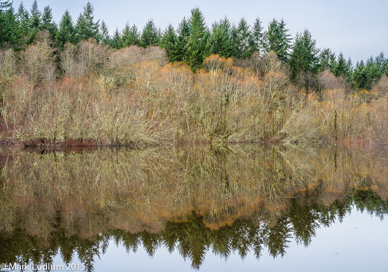 Vashon Island Pond Reflection 1 02-2015