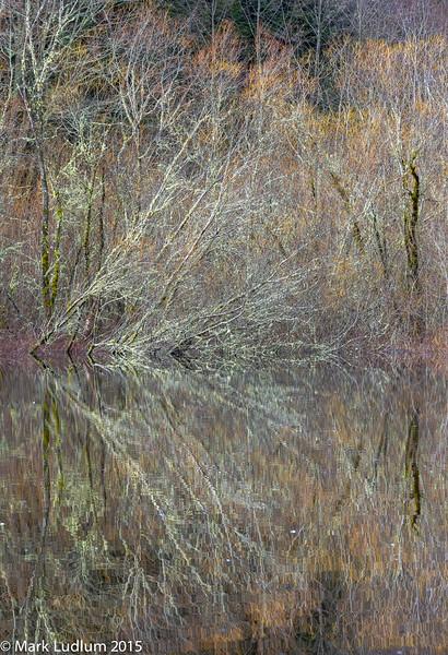 Vashon Island Pond Reflection 2 02-2015