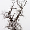 Tree with hoar frost, Happy Jack, 2011<br /> © Edward D Sherline