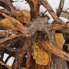 Tree Stump, 2009<br /> © Edward D Sherline