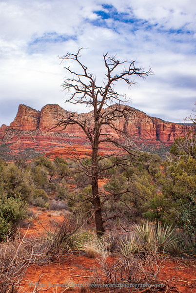 View from Little Horse trailhead along Rte. 179 South of Sedona