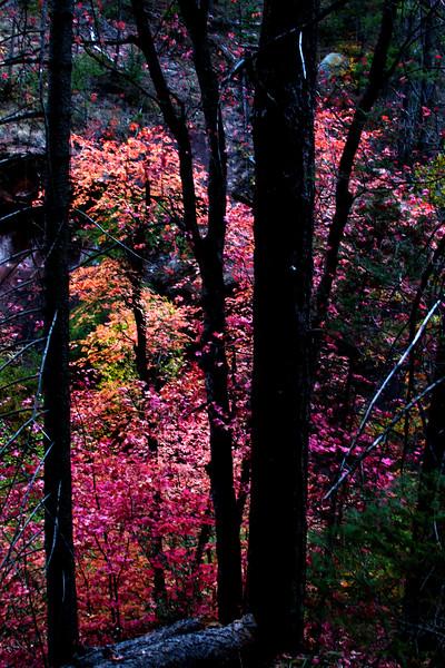IMG_6735 Sedona Fall Leaves copy