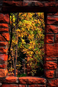 Trees thru ruins_6860