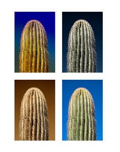 4 up cactus
