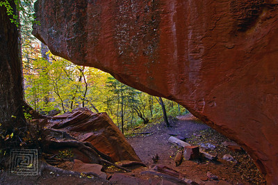 """Autumn Passages"", West Fork Park, Sedona, Az., 10'31/10"