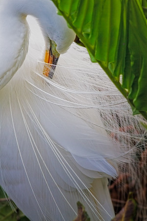 Aj Private Preen - White Egret