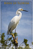 Intro to Birds of Florida - Bird Portrait Images