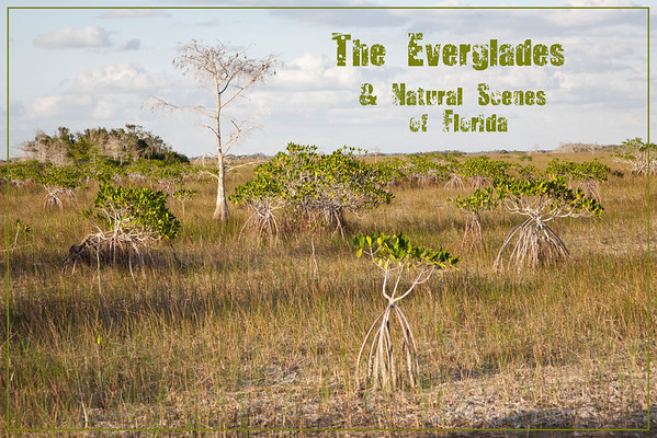 Everglades National Park - Flamingo, FL: Vast landscape of grasses punctuated by cypress and mangrove
