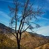 Charred Tree in Wilderness