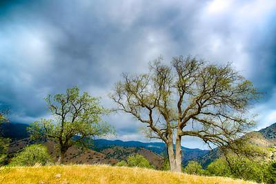 Trees on Meadow's Edge