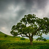 Full Tree Under Dark Clouds