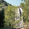 sequoia-king-11