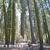 sequoia-king-2