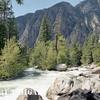 sequoia-king-9