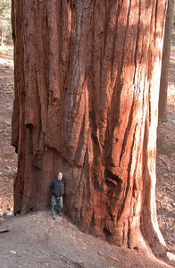 005-jfid_20091107_9871 - Me, being hugged by a tree.  They are big!  This is far from the biggest of them.