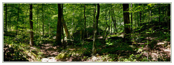 Shawnee National Forest-Bell Smith Spring. Panon  consisting of six seperate frames.