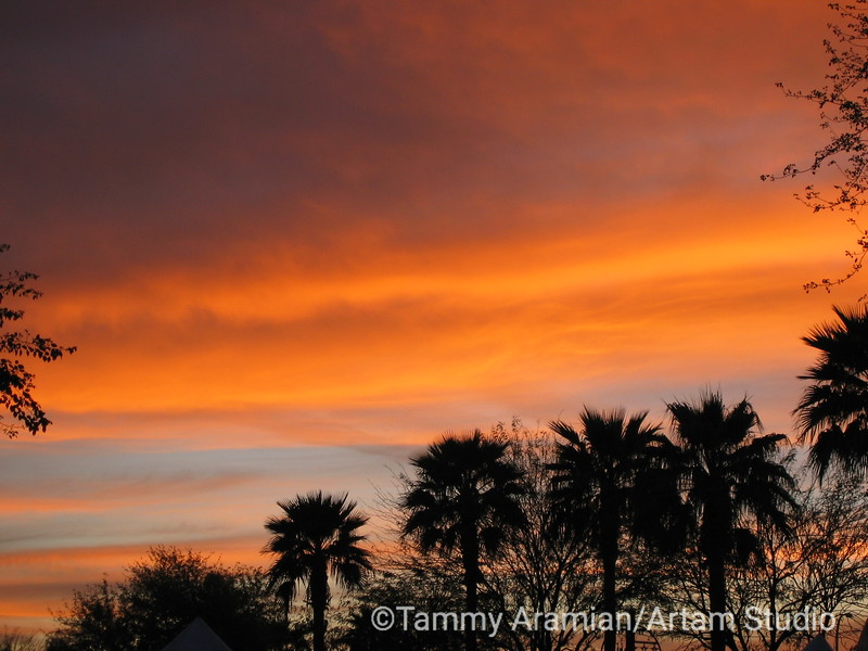Arizona orange, Scottsdale, March 2004