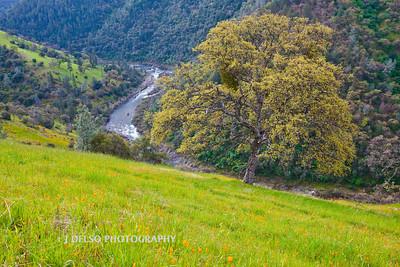 Sierra Foothills-2834