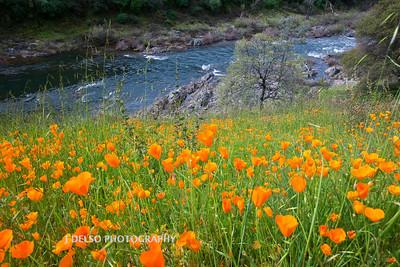 Sierra Foothills-2871