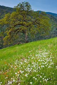 Sierra Foothills-2830
