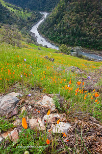 Sierra Foothills-2839