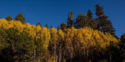 Autumn Yellow3