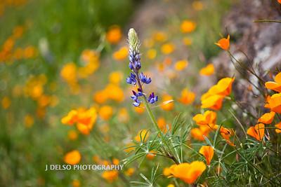 Sierra Foothills-2933