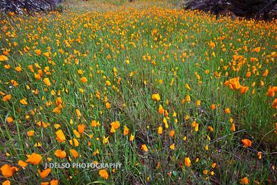 Sierra Foothills-2853