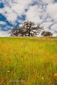 Sierra Foothills-2980