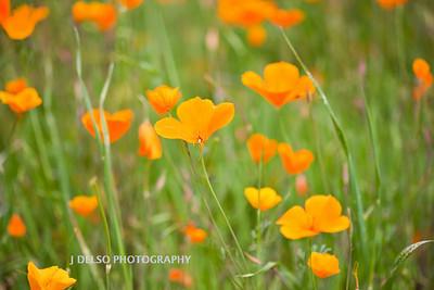 Sierra Foothills-2910