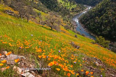 Sierra Foothills-2963