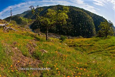Sierra Foothills-3008-Edit