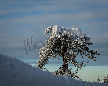 Wentling-8584
