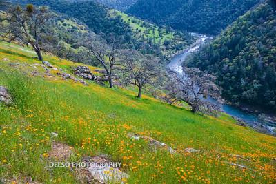 Sierra Foothills-2960