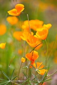 Sierra Foothills-2908