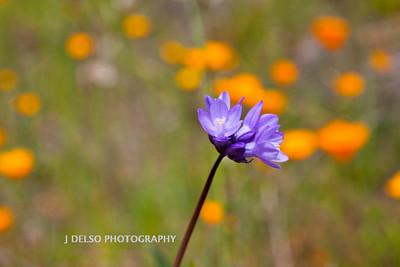 Sierra Foothills-2929