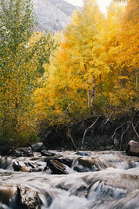 Creekside aspens