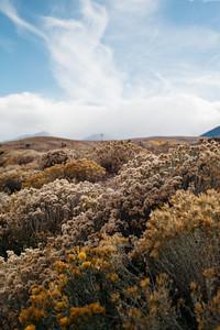 Steppe flora II