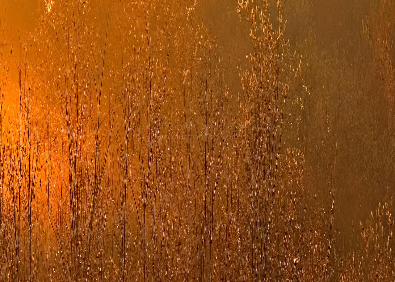 Golden Sunrise<br /> Madera, California