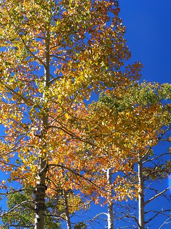 Sierras in Oct 2004