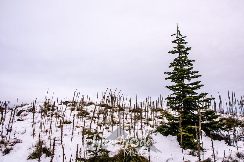 45  G Christmas Tree