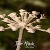 144  G Flower Rime