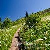 11  G Trail Up Flowers