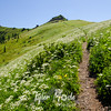 70  G Trail Up Through Wildflowers