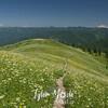 316  G MSH Rainier Adams and Trail