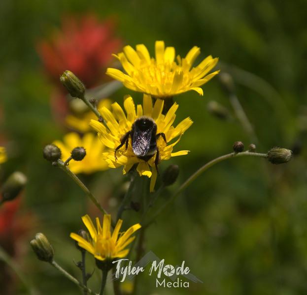 113  G Bumblebee