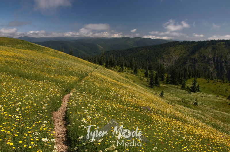 109  G Trail and Flowers East