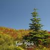 108  G Tree Compare
